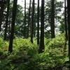 Im Wald kurz vor dem Cache
