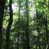 ...mitten im Wald